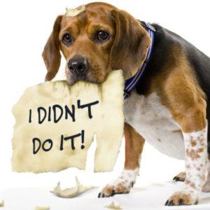 dog-ate-my-homework